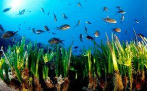 Un mundo debajo del mar